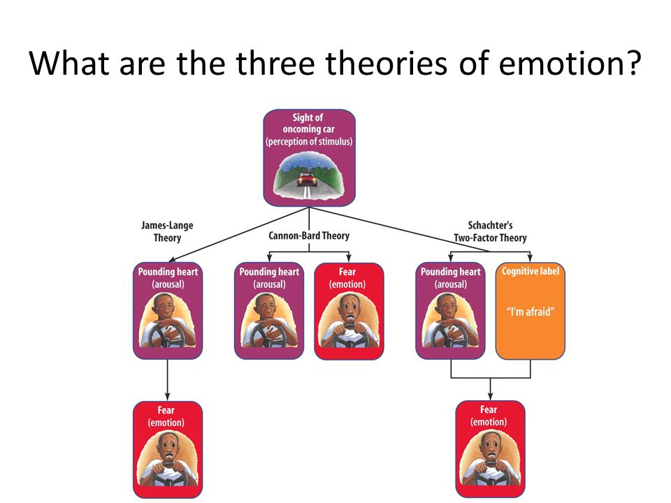 What are the three theories of emotion
