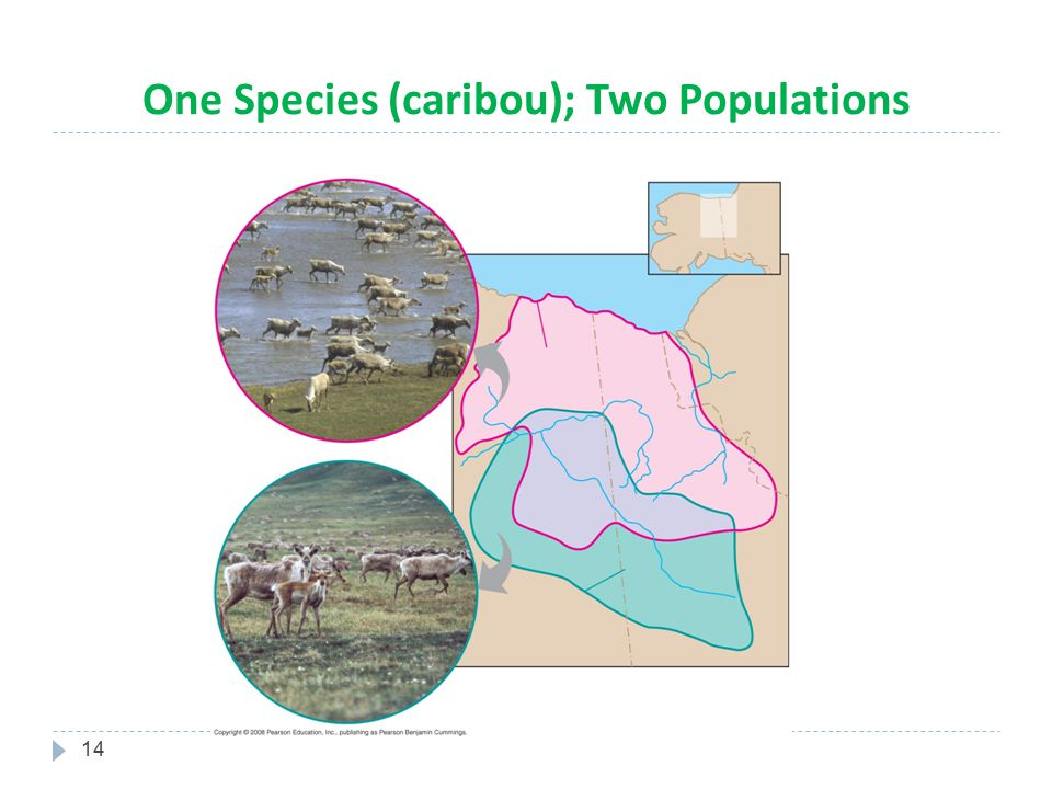 One Species (caribou); Two Populations