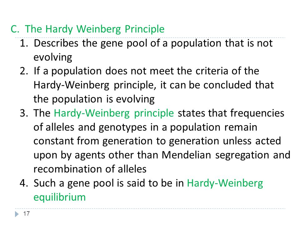 C. The Hardy Weinberg Principle 1