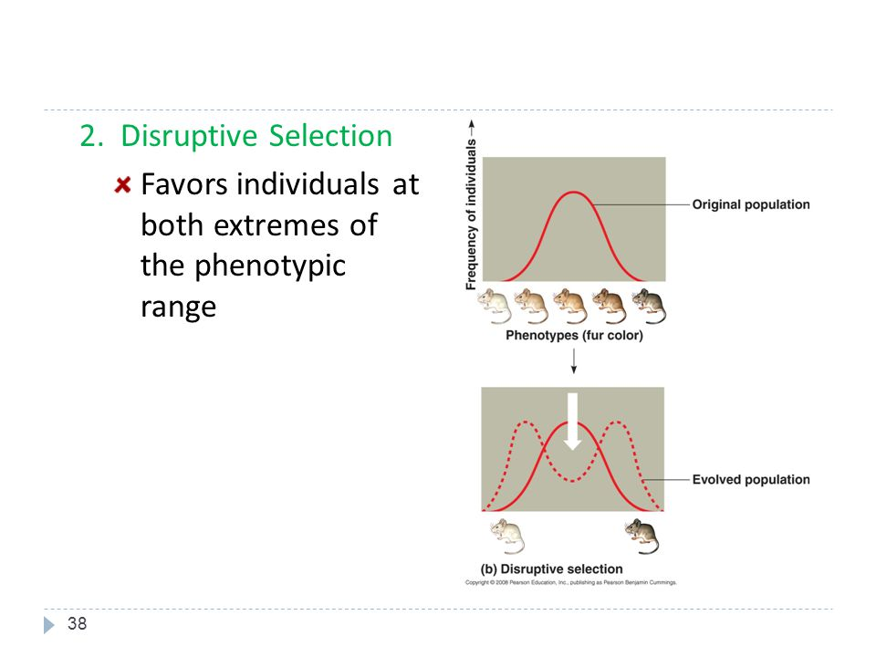 Favors individuals at both extremes of the phenotypic range