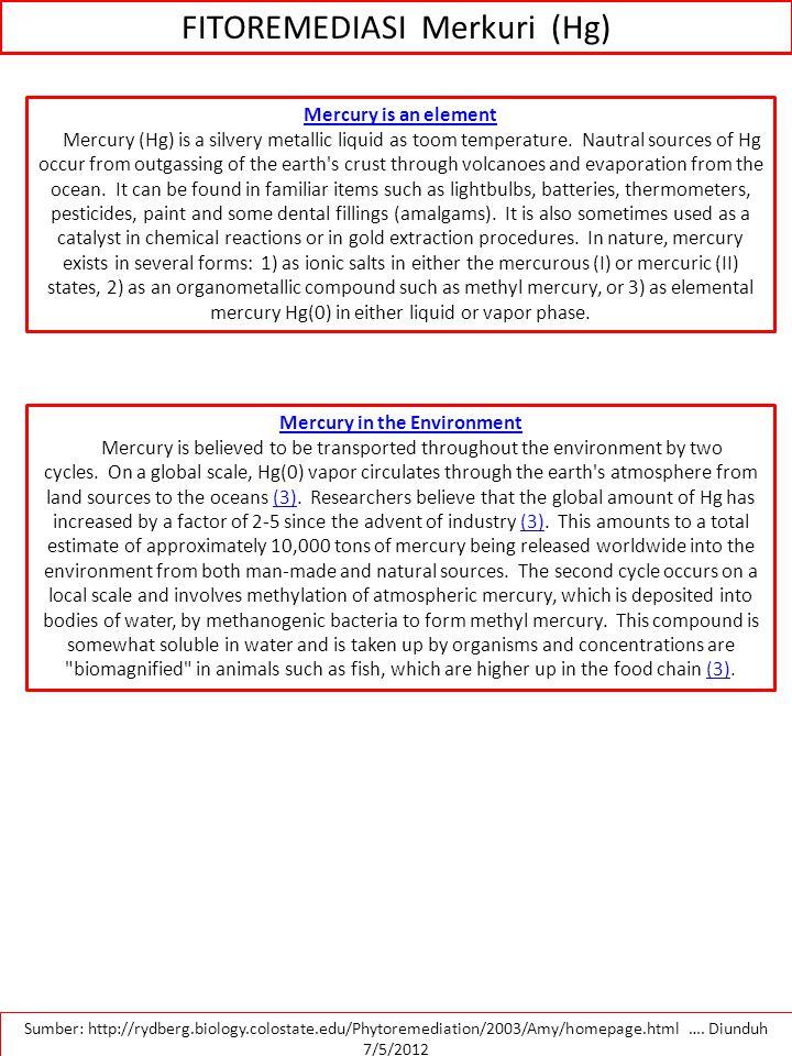 FITOREMEDIASI Merkuri (Hg)