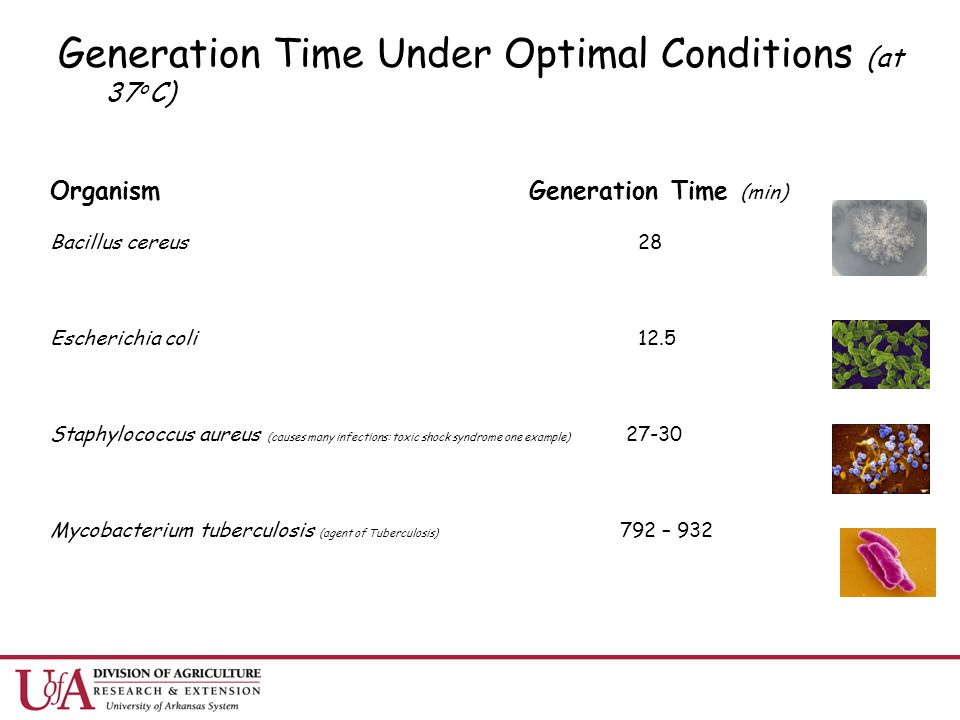 Generation Time Under Optimal Conditions (at 37oC)