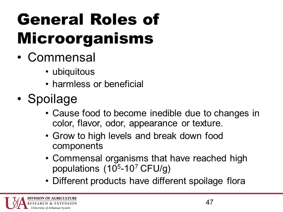 General Roles of Microorganisms