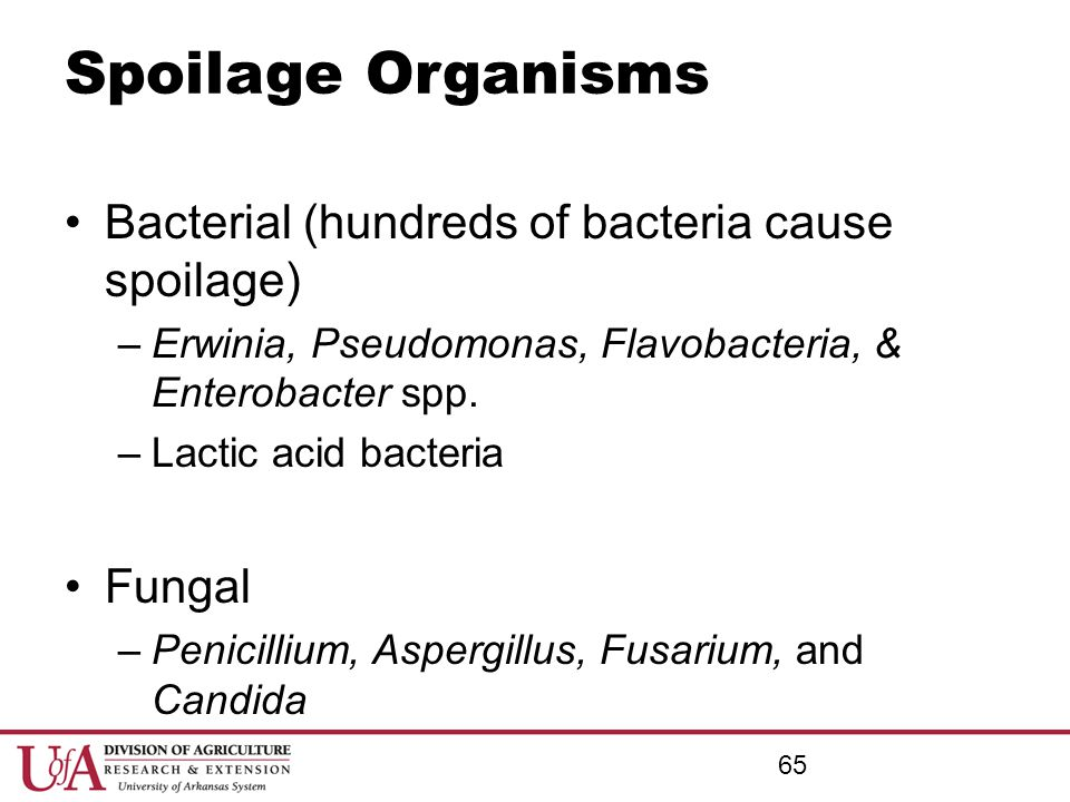 Spoilage Organisms Bacterial (hundreds of bacteria cause spoilage)