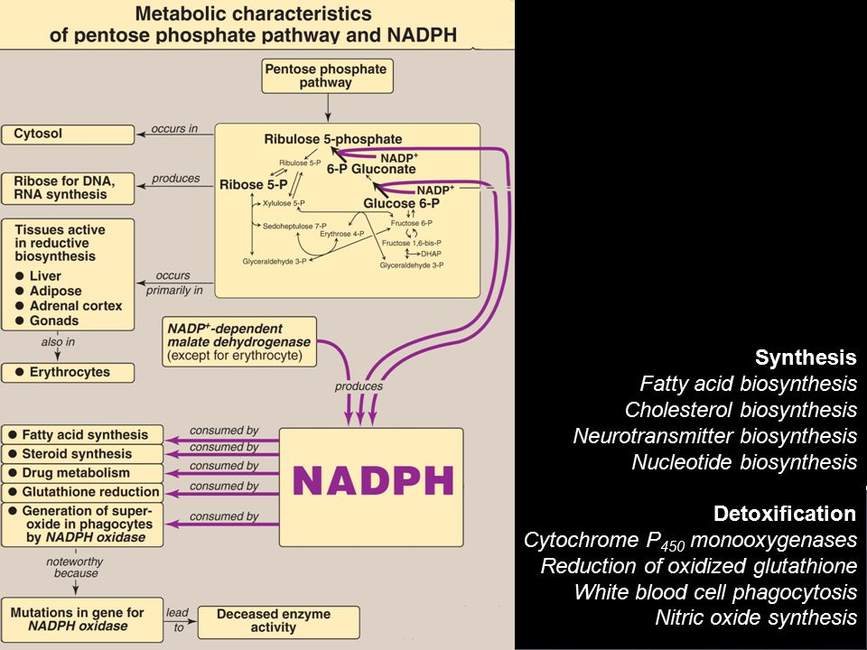 Synthesis Fatty acid biosynthesis. Cholesterol biosynthesis. Neurotransmitter biosynthesis. Nucleotide biosynthesis.