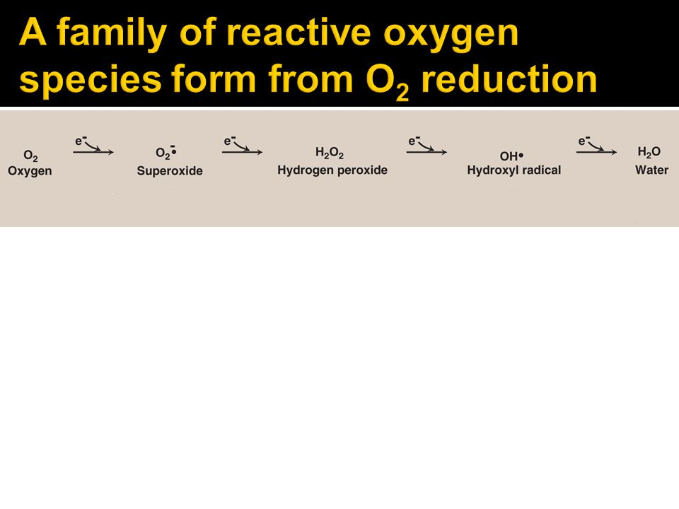 A family of reactive oxygen species form from O2 reduction