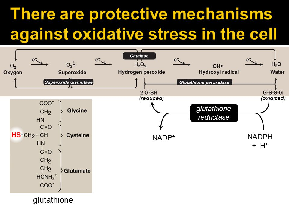 There are protective mechanisms against oxidative stress in the cell