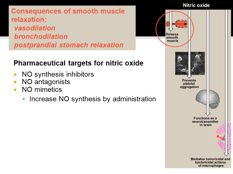 Consequences of smooth muscle relaxation: