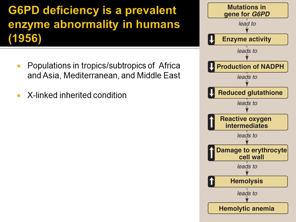 G6PD deficiency is a prevalent enzyme abnormality in humans (1956)
