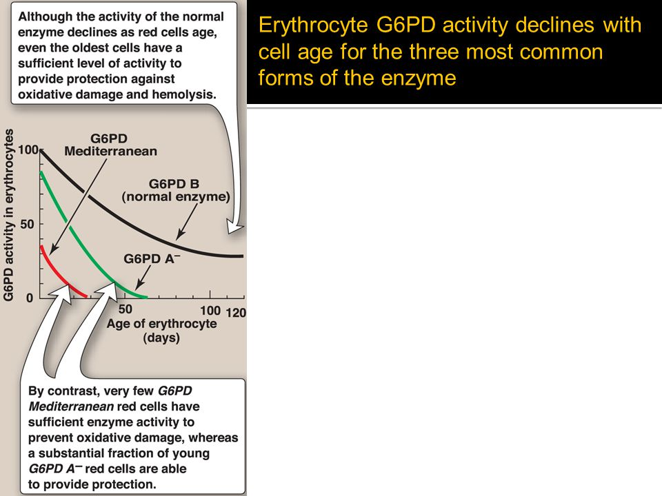 Erythrocyte G6PD activity declines with cell age for the three most common forms of the enzyme