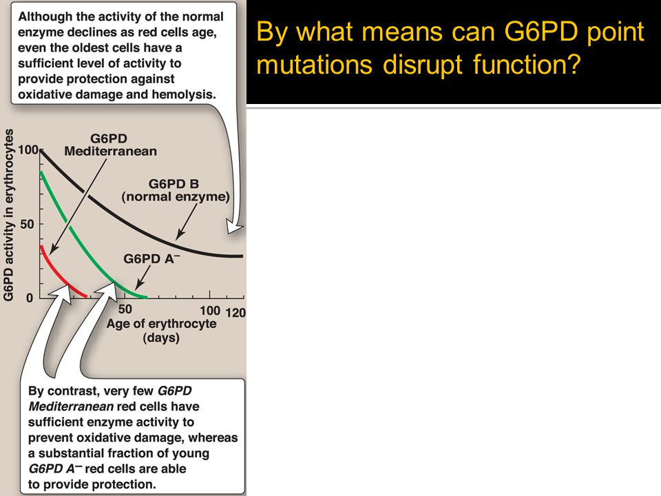 By what means can G6PD point mutations disrupt function