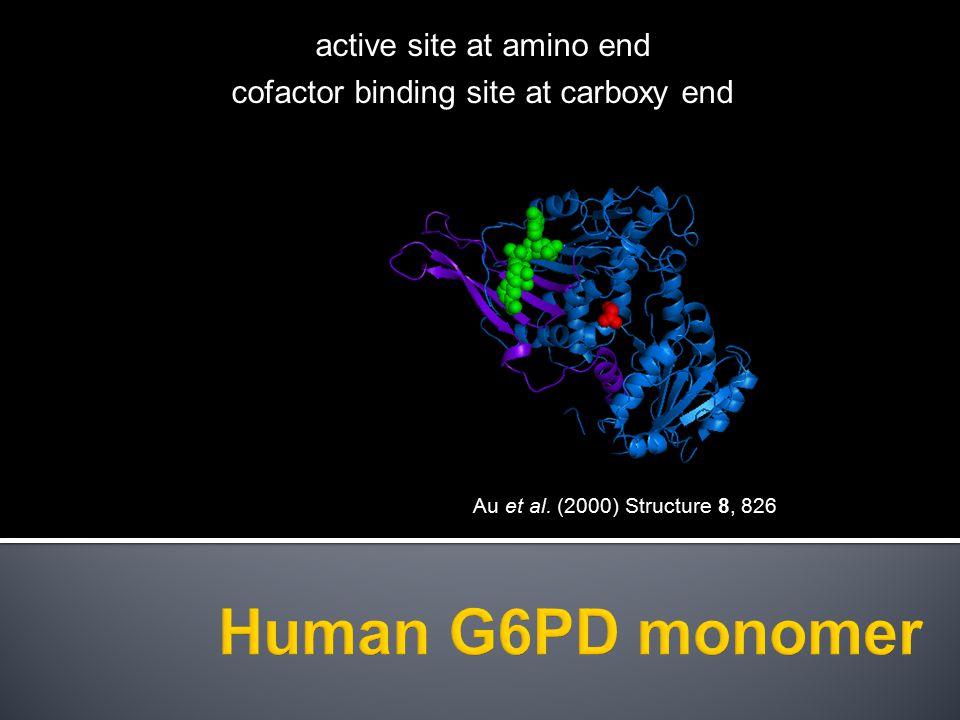 Human G6PD monomer active site at amino end