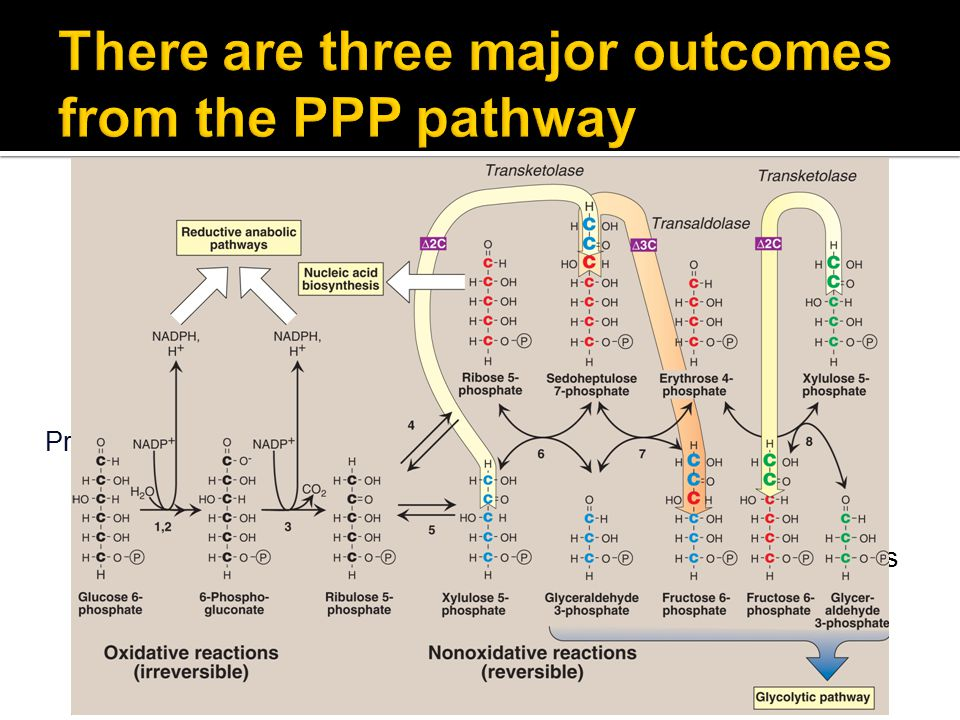 There are three major outcomes from the PPP pathway