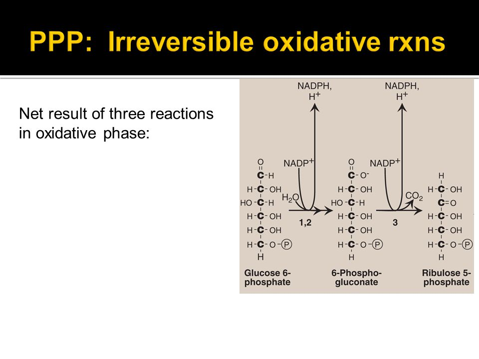PPP: Irreversible oxidative rxns