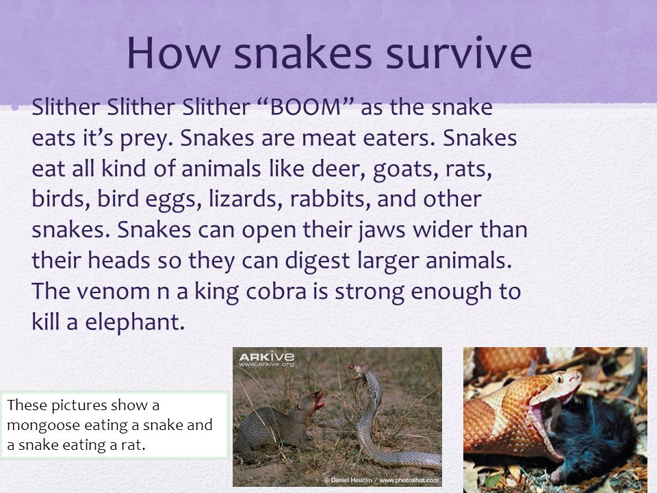 How snakes survive