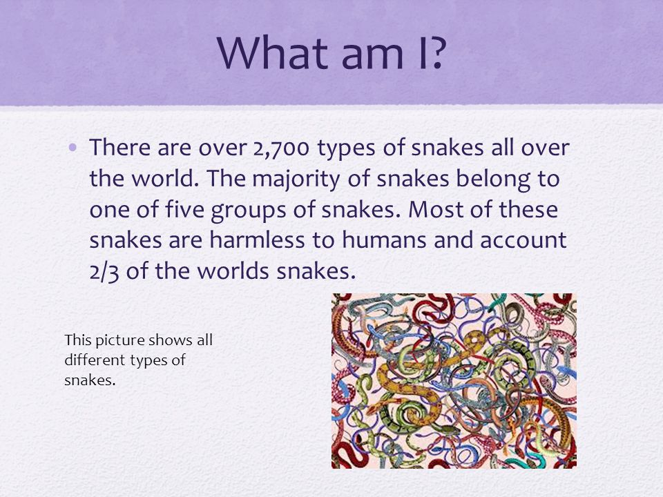 the types and classes of snakes the roams the earth Amphibians are one of the most interesting classes of animals learn about what defines an animal as an amphibian, as well as what makes them special identify different types of amphibians, as well learn about what defines an animal as an amphibian, as well as what makes them special identify different types of amphibians, as well.