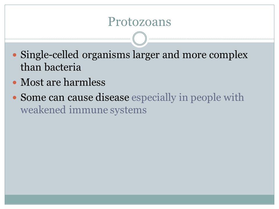 Protozoans Single-celled organisms larger and more complex than bacteria. Most are harmless.