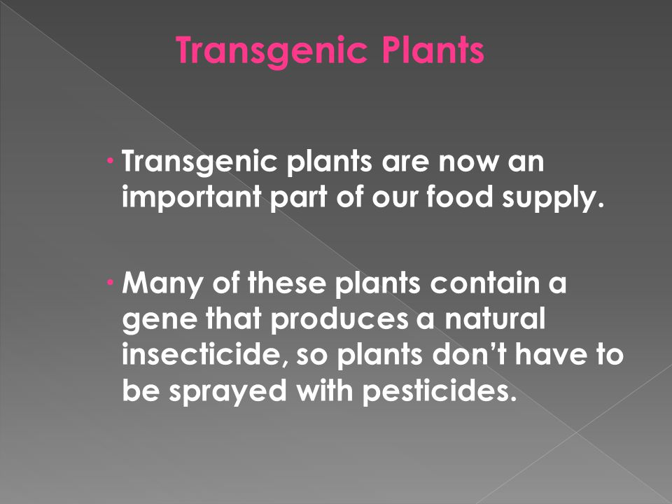 Transgenic Plants Transgenic plants are now an important part of our food supply.