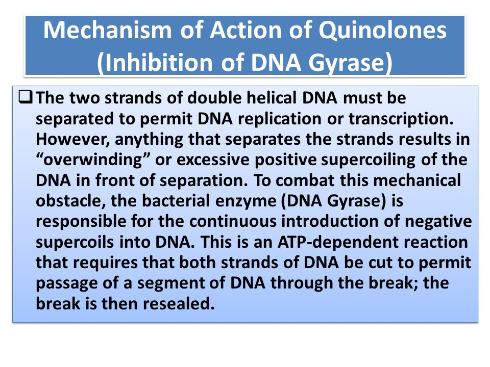 Mechanism of Action of Quinolones (Inhibition of DNA Gyrase)