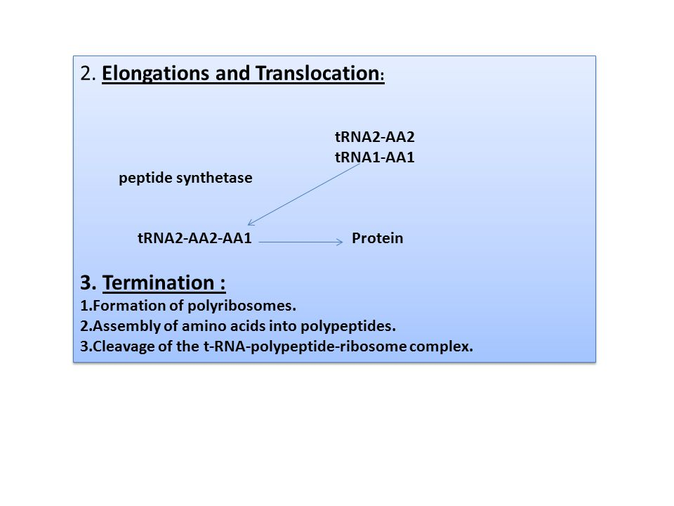 2. Elongations and Translocation: