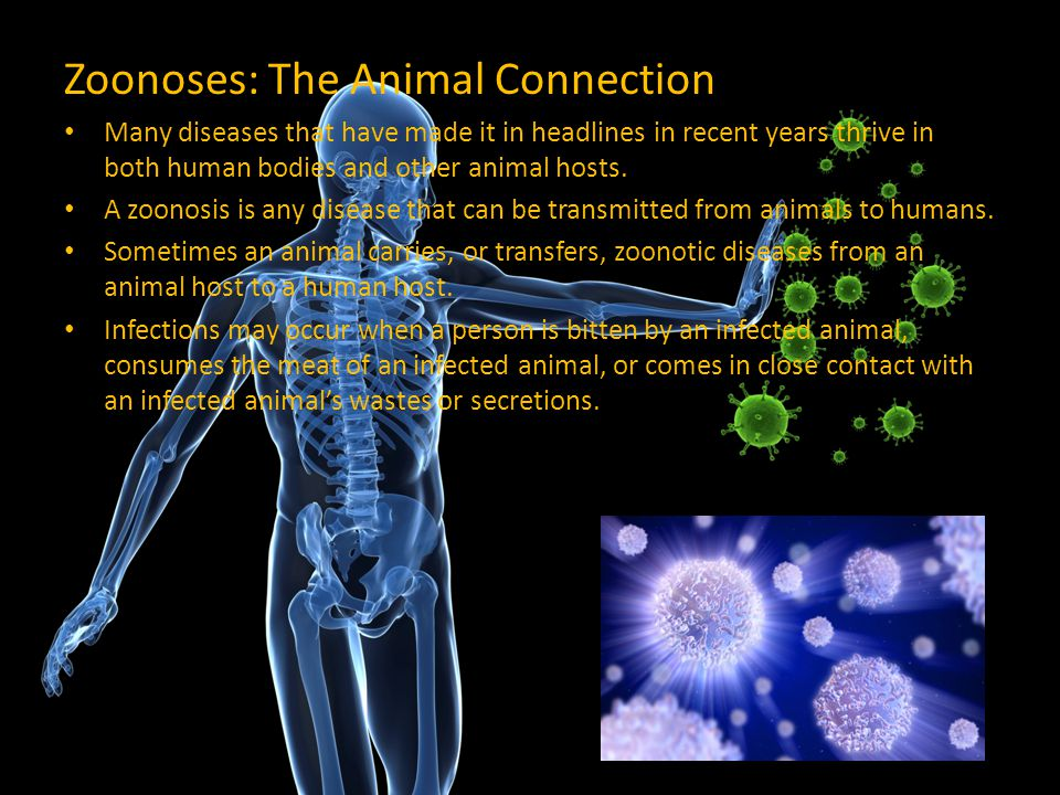 Zoonoses: The Animal Connection