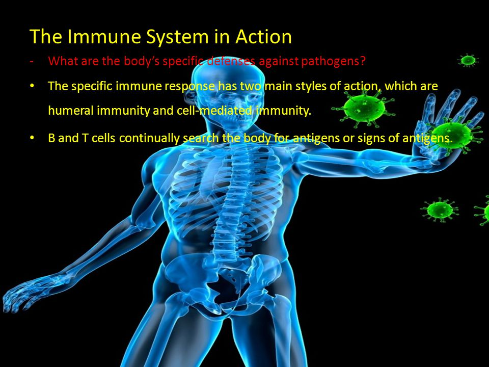 the immune system chapter 20