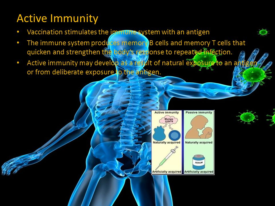 Active Immunity Vaccination stimulates the immune system with an antigen.
