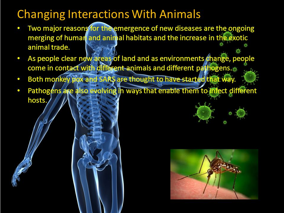Changing Interactions With Animals
