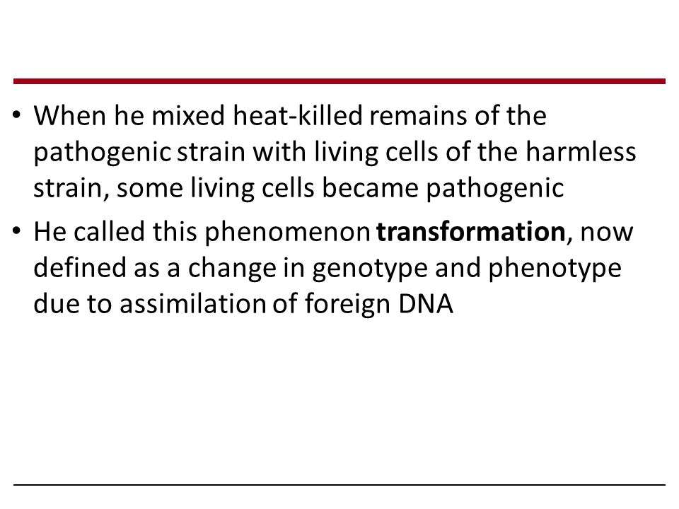When he mixed heat-killed remains of the pathogenic strain with living cells of the harmless strain, some living cells became pathogenic
