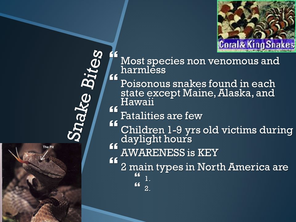 Snake Bites Most species non venomous and harmless