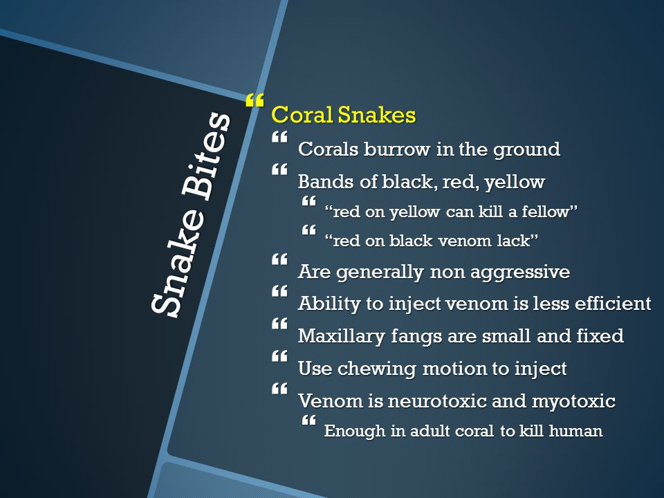 Snake Bites Coral Snakes Corals burrow in the ground