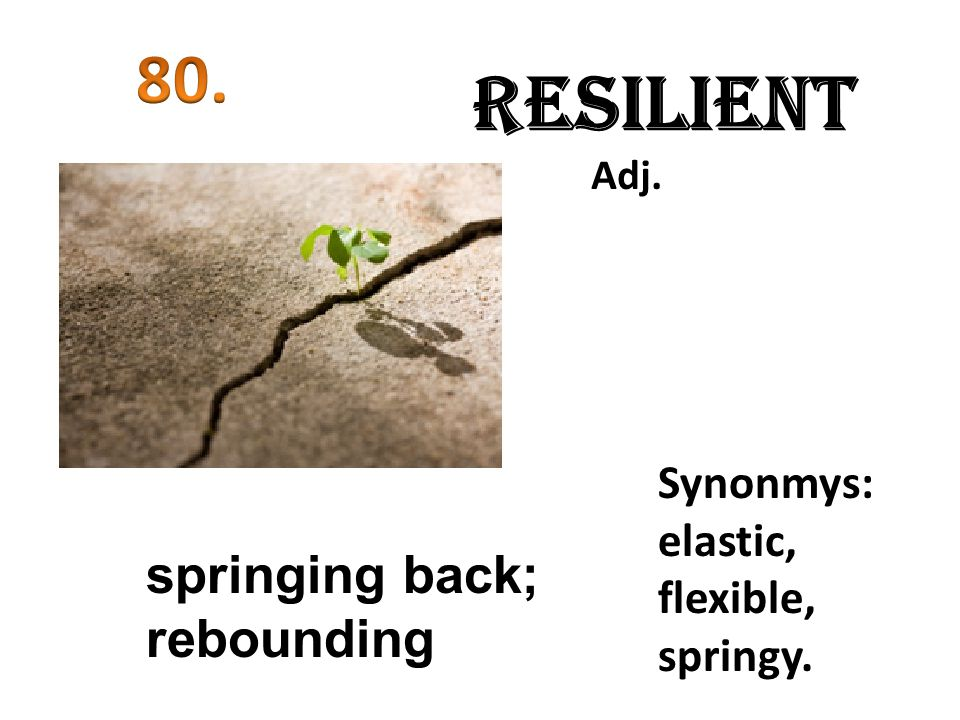 Resilient 80. springing back; rebounding