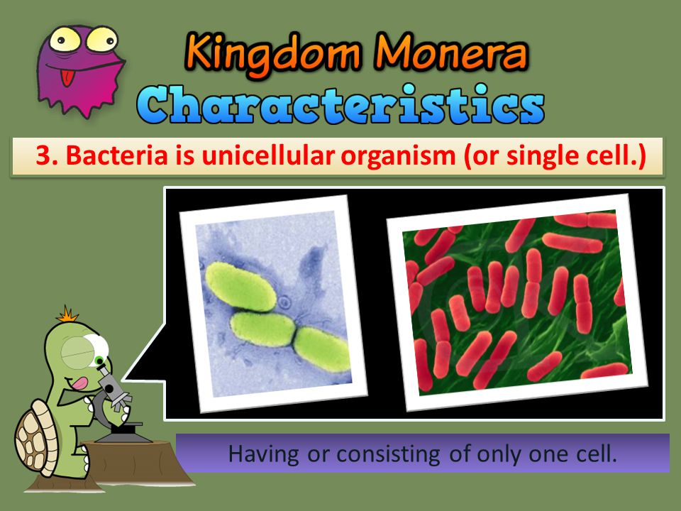 3. Bacteria is unicellular organism (or single cell.)