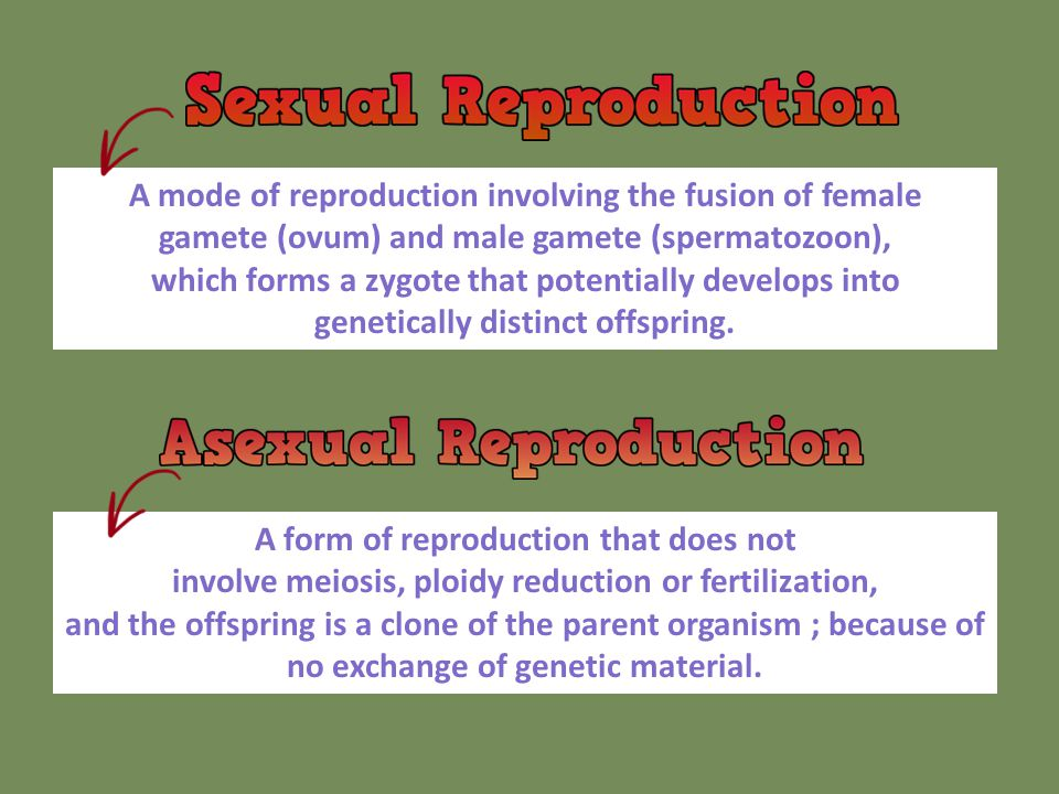A mode of reproduction involving the fusion of female gamete (ovum) and male gamete (spermatozoon),