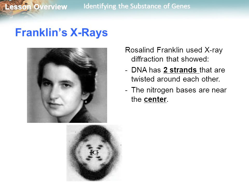 Franklin's X-Rays Rosalind Franklin used X-ray diffraction that showed: DNA has 2 strands that are twisted around each other.