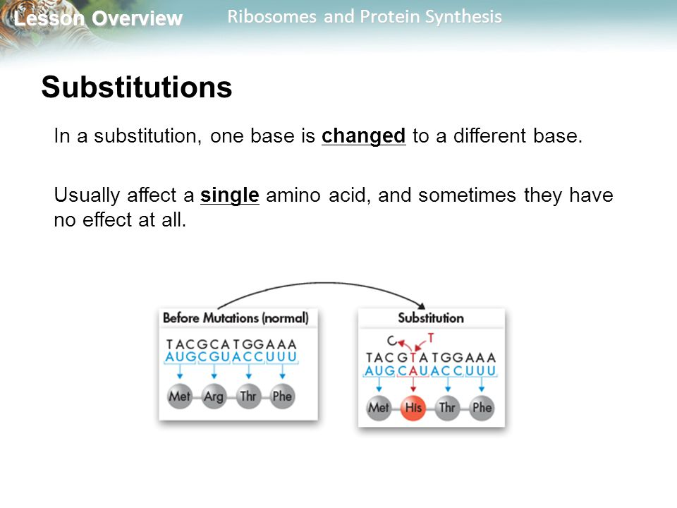 Substitutions In a substitution, one base is changed to a different base.