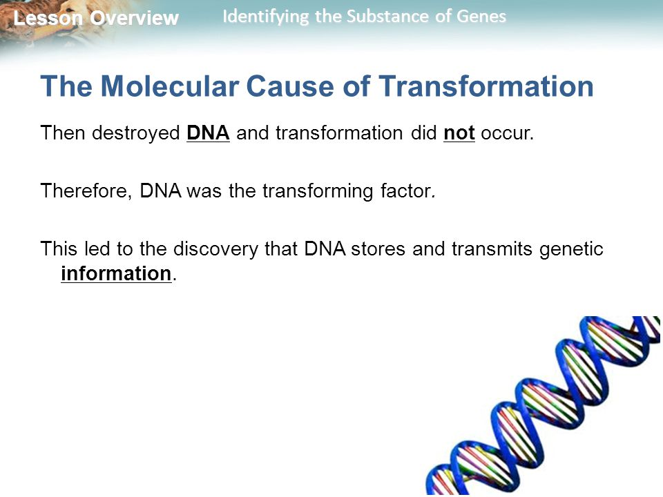 The Molecular Cause of Transformation