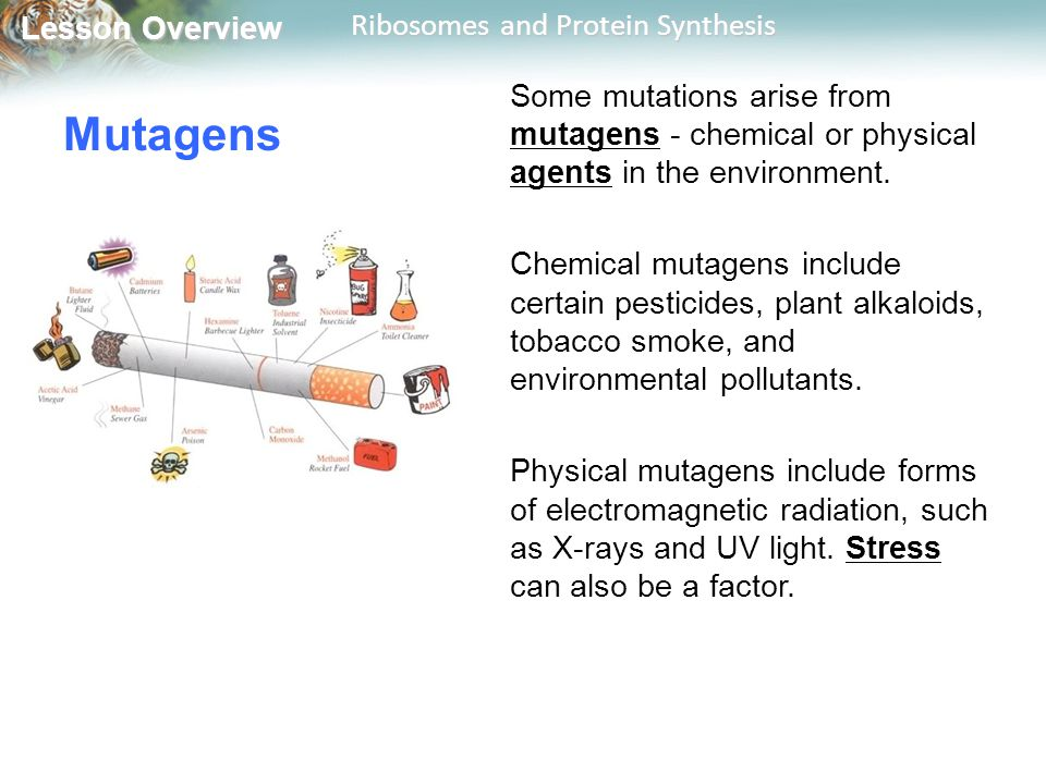 Some mutations arise from mutagens - chemical or physical agents in the environment.