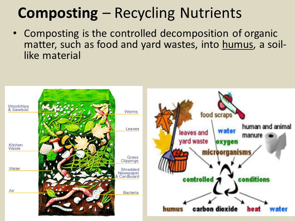 Composting – Recycling Nutrients