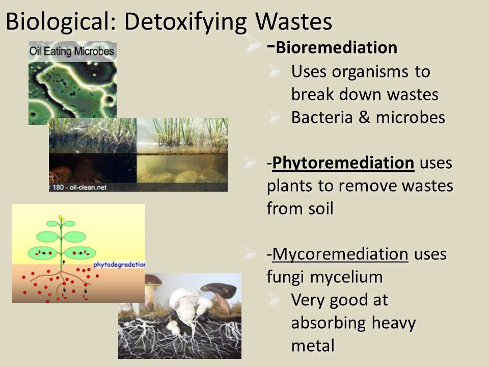 Biological: Detoxifying Wastes