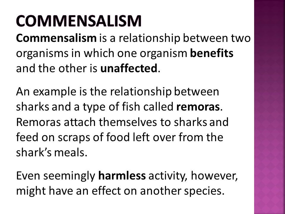 Commensalism Commensalism is a relationship between two organisms in which one organism benefits and the other is unaffected.