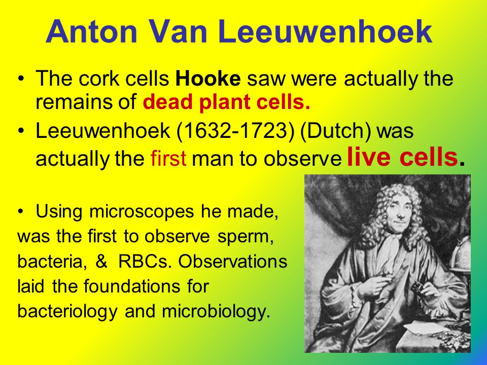 Anton Van Leeuwenhoek The cork cells Hooke saw were actually the remains of dead plant cells.