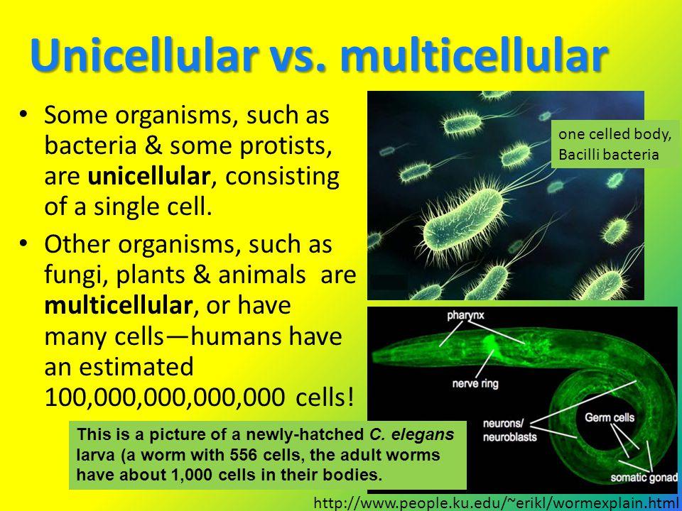 Unicellular vs. multicellular