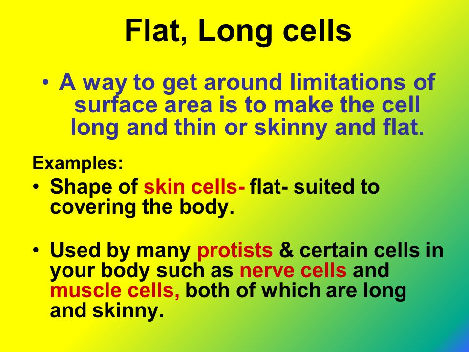 Flat, Long cells A way to get around limitations of surface area is to make the cell long and thin or skinny and flat.