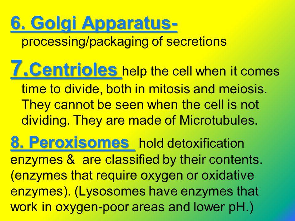 6. Golgi Apparatus- processing/packaging of secretions