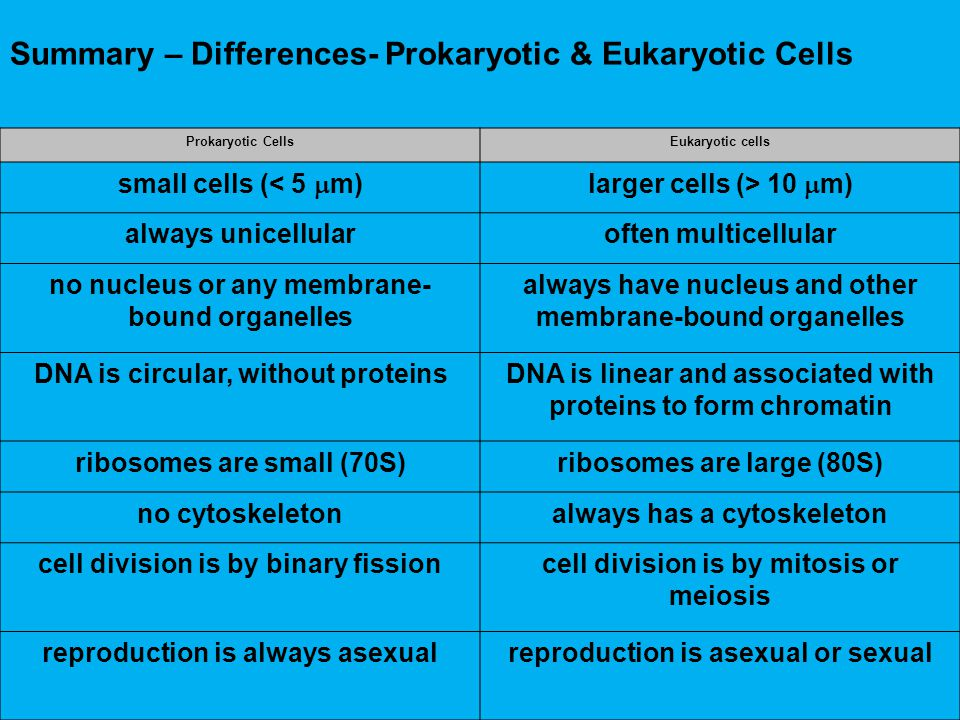 Summary – Differences- Prokaryotic & Eukaryotic Cells