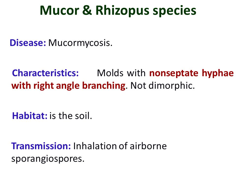 Mucor & Rhizopus species