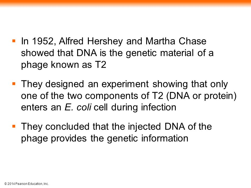 In 1952, Alfred Hershey and Martha Chase showed that DNA is the genetic material of a phage known as T2