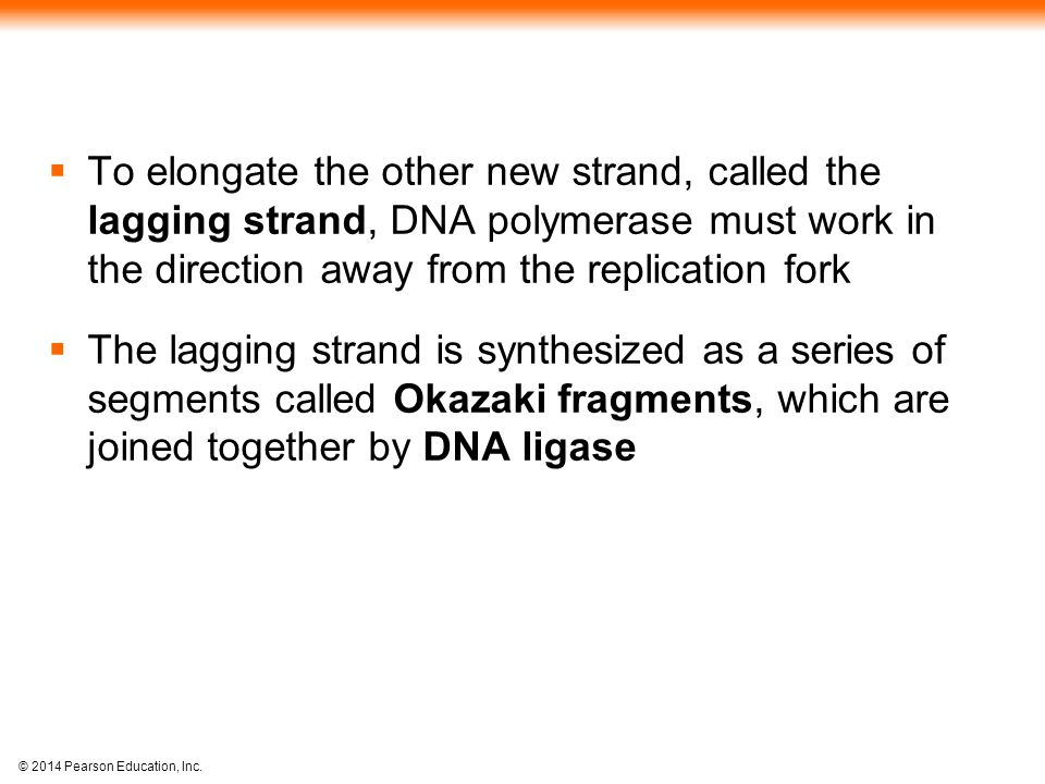 To elongate the other new strand, called the lagging strand, DNA polymerase must work in the direction away from the replication fork