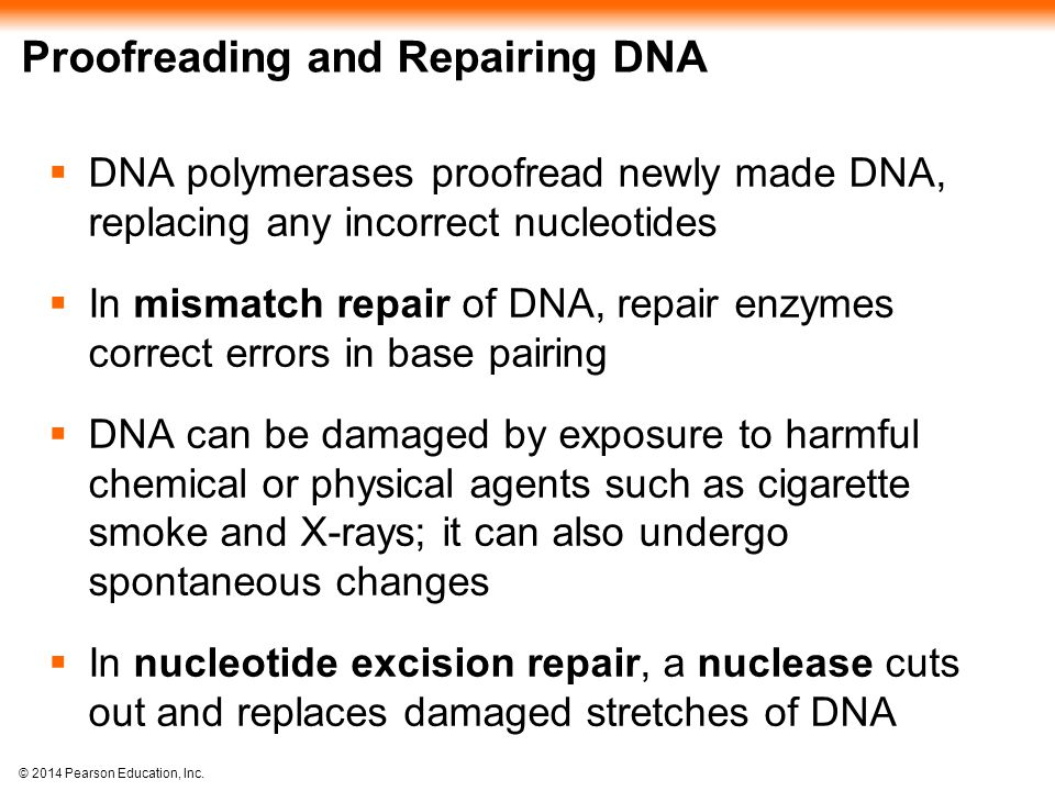 Proofreading and Repairing DNA